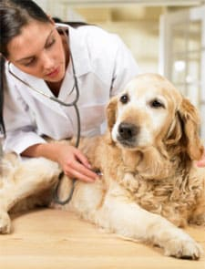 perros humanos enfermedades