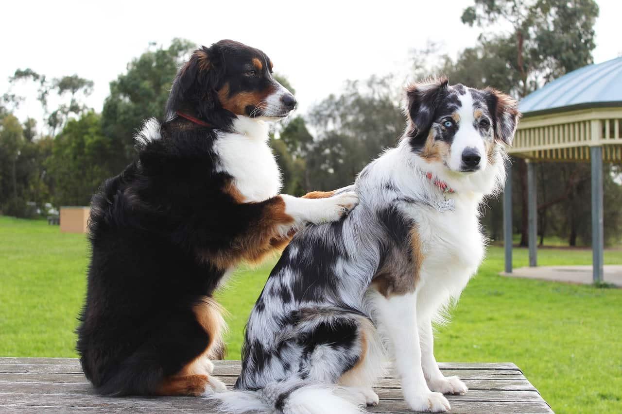 proteger a tu mascota es lo primero que tienes que hacer