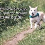 Descubre los motivos por los que tener una mascota beneficia tu salud